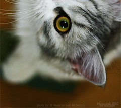 NAOKI ♥ #2 (Munirah bnt Abdulaziz) Tags: cats digital cat canon eos best your naoki bests عيون جميلة قطط 400d خخخخخخ قطوه
