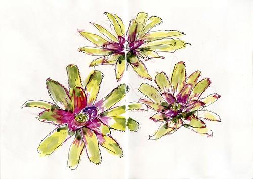 101224 Sketchy Xmas Eve04 Garden