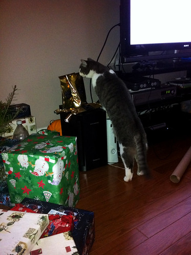 kitty snoops in the cat gifts.