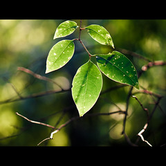 Here Comes the Sun (Explored) (Danny Yao) Tags: blue green sunshine yellow leaf nikon bokeh danny marco yao thebeatles 105mm f28g d80