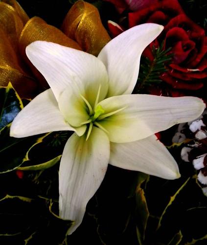White Christmas flower!