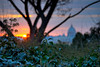 Delicatezza (the_lighter) Tags: flowers trees sunset rome roma alberi nikon focus san tramonto cupola belvedere fiori rami pietro pincio d60
