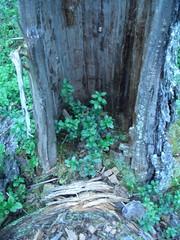 CIMG1599 (AmyFromTheCourt) Tags: arte natura case uccelli finestra fiori piante castello montagna macchina gabbiano alvaraalto renne finlandia babbonatale roccie circolopolareartico