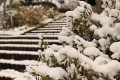 It's Snow
