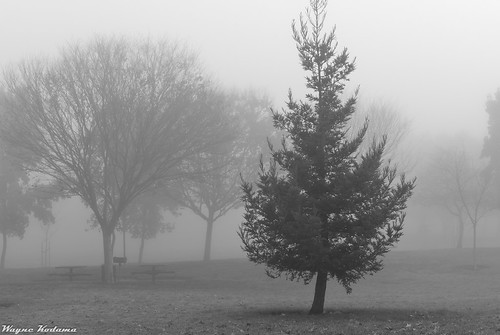 280/365 - Morning Fog
