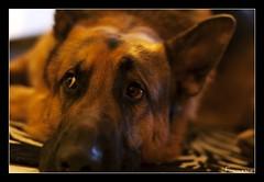 Jack (*kikka83*) Tags: dog animals cane ritratto animali primopiano pp circolofotograficopaullese nikonflickraward