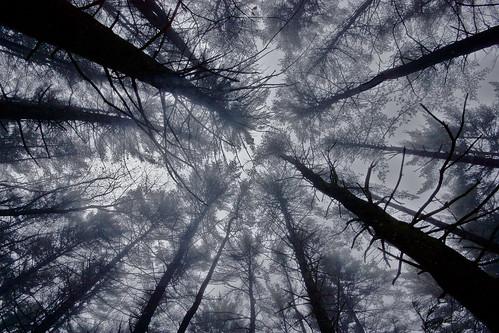 フリー写真素材, 自然・風景, 森林, 樹木, 霧・霞, モノクロ写真,