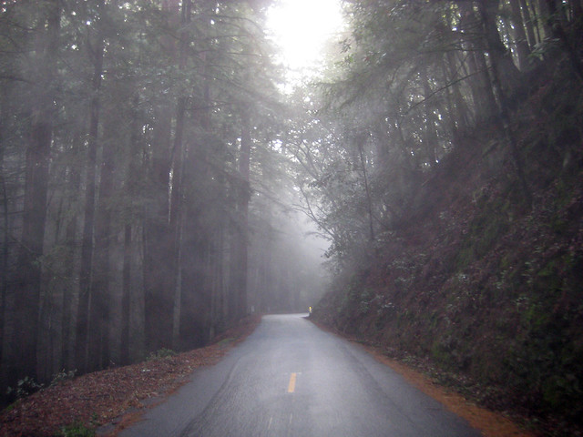 Kings Mountain Rd. In The Fog