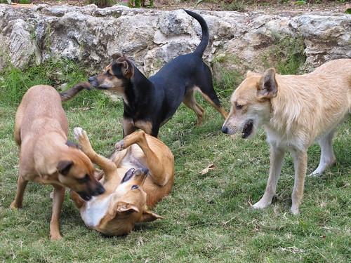 Dogs at Hemingway's Finca la Vigía