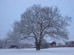 Snow December 2010 008