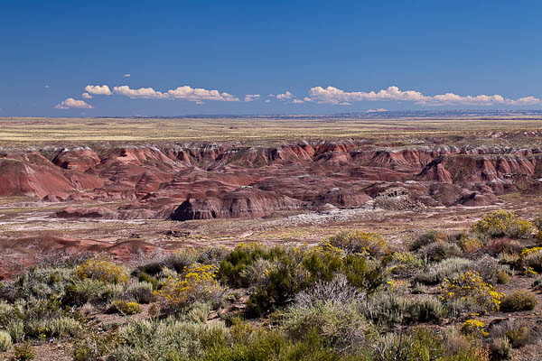 Harsh Beauty in the Painted Desert