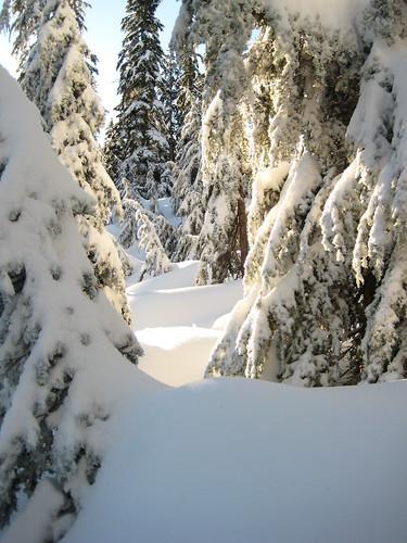Snowshoe hike Mt. Seymour 2010