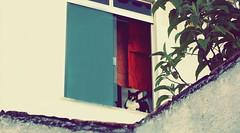 Gato da vizinha espiando meu quintal .-. (Danielly Almeida) Tags: windows tree cat cores gato felino colored janela walls rvore muros daniselah