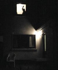 the doctor's house (tartalom) Tags: tartalom christophersweeney