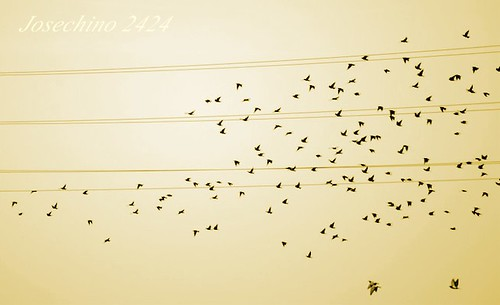 Desbandada de notas...... Mi musica no suena.