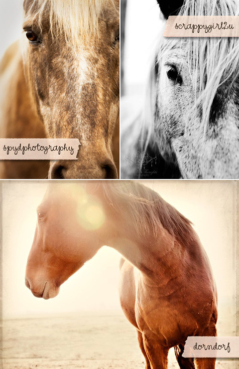 Horse Equine Art Photography