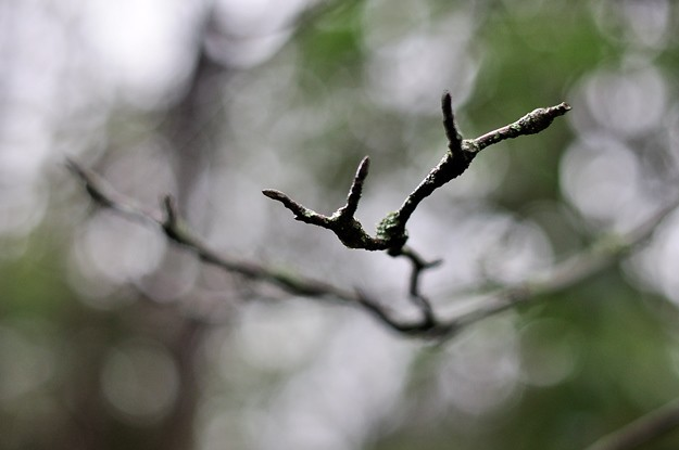 branch 625