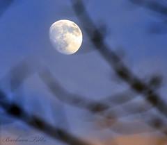 Moon at Dusk through Bokeh Maple Branches (misst.shs) Tags: sunset sky moon silhouette maple nikon bokeh dusk branches d90 hbw
