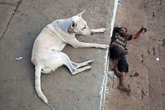 Dog - Varanasi, India (Maciej Dakowicz) Tags: poverty city dog india animal asia sleep poor varanasi snooze kashi benares uttarpradesh