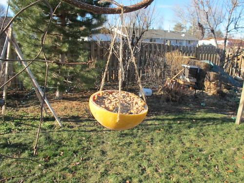 Grapefruit bird feeder is up