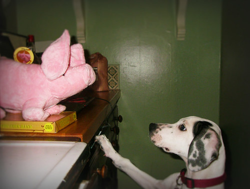 Day 237 - Vic and the Pig