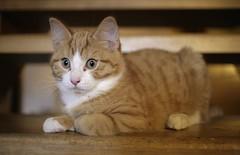 what u´re doing? (DerDaniel1) Tags: cat 35mm canon eos kitten maine coon 5d katze f2 ef kater kätzchen mainecoone coone weitwinkel