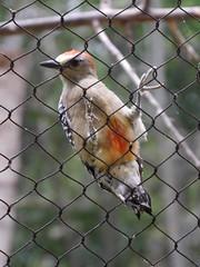 P2230441 (Gareth's Pix) Tags: aviarionacionaldecolombia baru colombia aviario bird