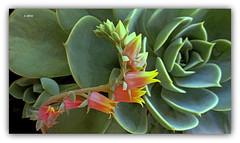 Dia das Flores. (o.dirce) Tags: flor flower vegetao odirce nature natureza riodejaneiro cactus