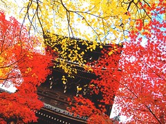 Shinnyodo Temple (love_child_kyoto) Tags: travel autumn tree japanesegarden kyoto autumnleaves popart    olympuspen  sakyoku            shinnyodotemple  microfourthirds   flickraward kaguraoka