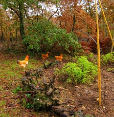 Hugelkulture bed in November and some young chickens (hardworkinghippy) Tags: bio permaculture organicvegetables bourrou lgumesbio organickitchengarden permaculturefrance freerangechickensgmofreeseedsansogmgmofreeandorganicfarming