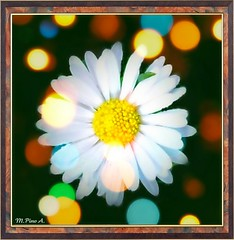 Anoche  so... //  Last night I dreamed... (Arice39) Tags: flowers light flores color texture textura luz daisies nikon dream margaritas soar mywinners arice39
