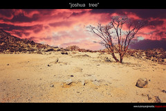 joshua tree (ang KulaS BoW) Tags: 1855mm winners kulas canon500d kulay mywinners thisphotorocks