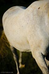 Horses_183_20100907 (T. Scott Carlisle) Tags: horses horse white farm tsc 85mmf14d 50mmf12 lightroom3 tphotographiccom tscottcarlisle ellecummans heahtercummans tscottcarlislecom