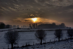 Geese looking for a place to sleep. (DutchManPieter2003) Tags: leica winter sunset holland netherlands geese zonsondergang nederland ganzen dordrecht paysbas biesbosch m82 hollandsebiesbosch dieniederlaende zuidhaven zuidplaatje scenicsnotjustlandscapes naturallyartificial afhht
