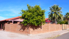 cornered 2 (deana rae) Tags: street blue arizona tree brick home wall corner ian tucson neighborhood someoneliveshere