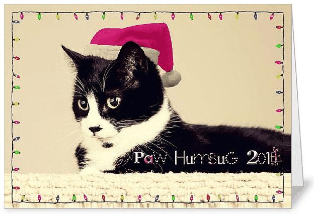 Paw Humbug SF Card