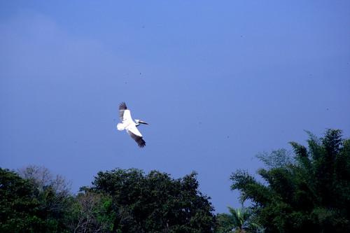 Ranganathittu 020.CR2
