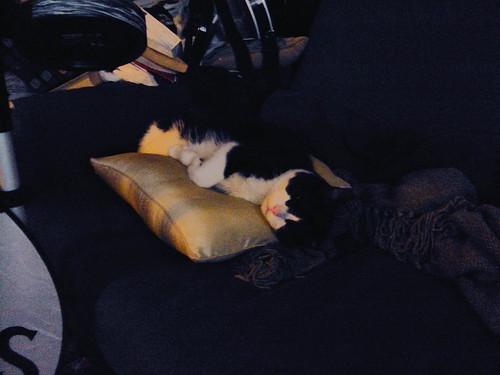 Hooker's New Pillow