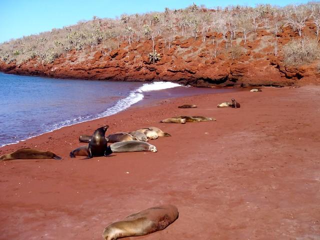 Sea Lions On Rabida Island
