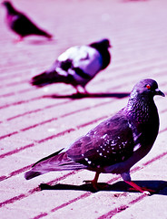 (Vadim.Wayer) Tags: summer 3 birds wayer