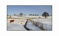 Pretty White Horse with Red Coat Amidst A Fine Scottish Winter Scene (Magdalen Green Photography) Tags: horse snow scotland pretty freezing scottish redcoat winterscene prettyhorse rurallandscape scottishwinter dsc6790 iaingordon prettywhitehorsewithredcoatamidstafinescottishwinters prettywhitehorsewithredcoatamidstafinescottishwinterscene