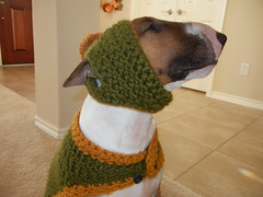 Knuckles (miss courtenay) Tags: light silly hat coast sweater texas gulf smiles mackenzie bud spuds wooly bullterrier knuckles