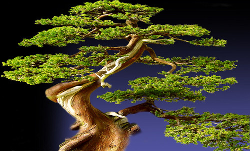 """Bonsai 083 • <a style=""""font-size:0.8em;"""" href=""""http://www.flickr.com/photos/30735181@N00/5261934222/"""" target=""""_blank"""">View on Flickr</a>"""