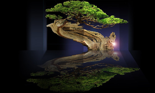 """Bonsai001 • <a style=""""font-size:0.8em;"""" href=""""http://www.flickr.com/photos/30735181@N00/5261955474/"""" target=""""_blank"""">View on Flickr</a>"""