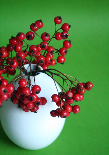 red berry on green