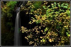Small Falls (JSB PHOTOGRAPHS) Tags: autumn fern leaves oregon leaf moss nikon d2x falls waterfalls ferns tokatee smallfalls highway138