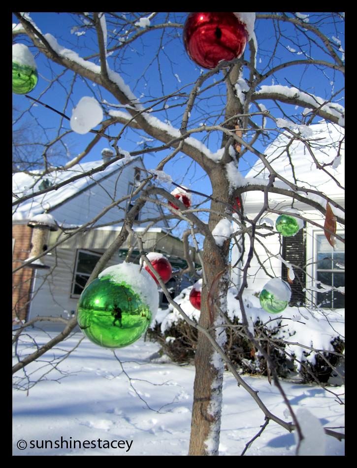 79/365(2): outdoor xmas tree...