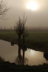 Mistig Rhijnauwen I (junlal) Tags: trees light sun mist holland reflection tree water netherlands fog contrast landscape licht nevel bomen nikon utrecht nederland boom zon landschap weerspiegeling d90