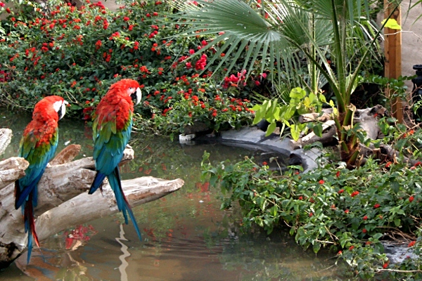 Parrots at the Wildlife World Zoo
