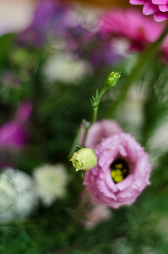Ruby's Flowers 2
